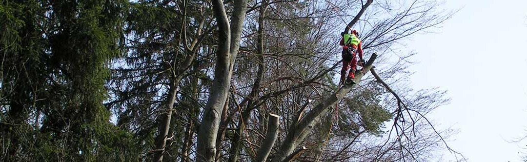 Fachgerechte Pflege zur Erhaltung Ihres Baumbestandes